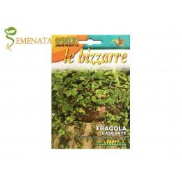 Семена на висящи ягоди (каскадни) Атила - приятен аромат и апетитни плодове