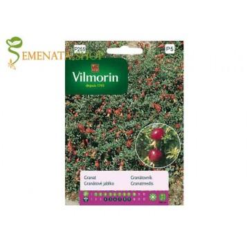 Мини нар семена за отглеждане в саксия и двор (Punica granatum nana)
