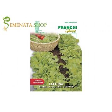 Италиански семена на салата Дъбов лист - жълтозелена и много вкусна