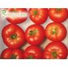 Семена на домати Мондиал F1 (Mondial F1) - ранен сорт за пролетно, есенно и зимно производство