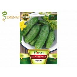 Семена на корнишони с малки плодове Одис F1 - крехки и вкусни