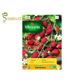 Семена на саксийна ягода - целогодишна и ароматна със страхотен вкус