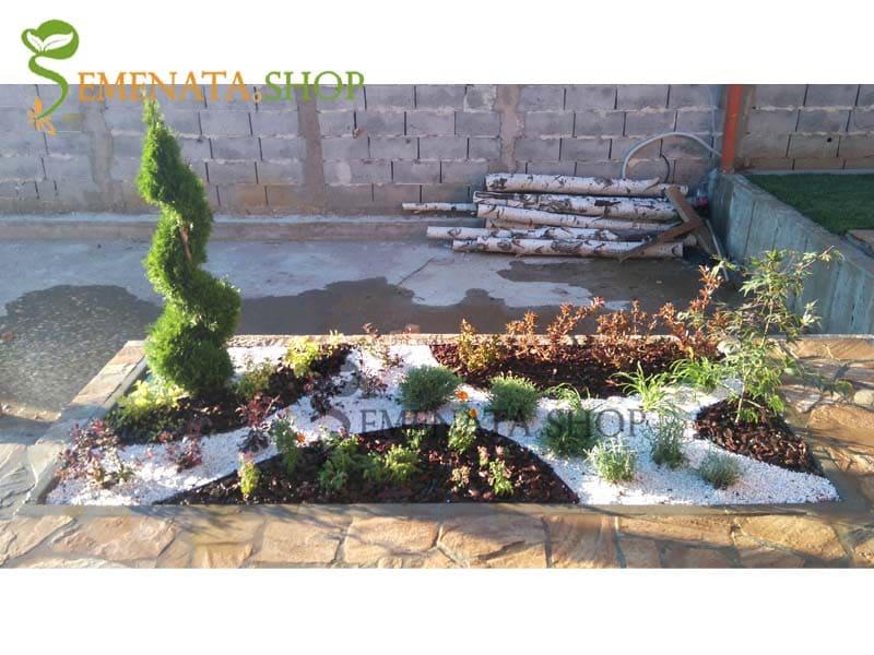 Аранжировка от декоративни растения, мозайка и мулч